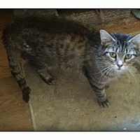 Adopt A Pet :: Auroa - london, ON