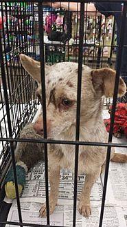 Terrier (Unknown Type, Medium) Dog for adoption in Fresno, California - Mocha