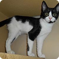 Adopt A Pet :: Oreo - Chattanooga, TN
