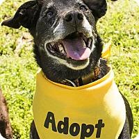 Adopt A Pet :: Blackie - Huntsville, AL