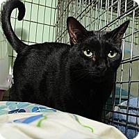 Adopt A Pet :: Simon - New York, NY