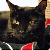 Adopt A Pet :: Ciece - Lunenburg, MA