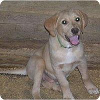 Adopt A Pet :: Loxley - Glastonbury, CT