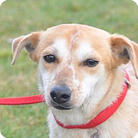Adopt A Pet :: Bentlry - Tumwater, WA