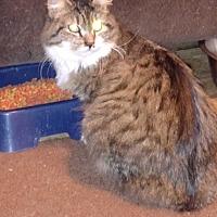 Adopt A Pet :: Panama - Benton, PA