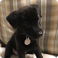 Adopt A Pet :: Jane - Marietta, GA
