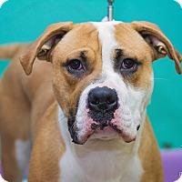 Adopt A Pet :: T-Bone - Evansville, IN