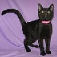 Adopt A Pet :: Zuma - Powell, OH