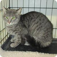 Adopt A Pet :: Skylar - Reeds Spring, MO