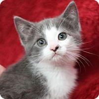 Adopt A Pet :: Heather Anne - Raleigh, NC