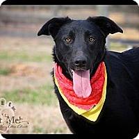 Adopt A Pet :: Magic - Albany, NY