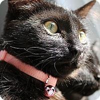 Adopt A Pet :: Boston Cream - Alexandria, VA