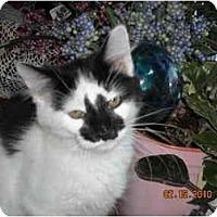 Adopt A Pet :: Patrick - Riverside, RI
