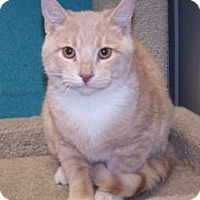 Adopt A Pet :: K-Eva1-Aaron - Colorado Springs, CO