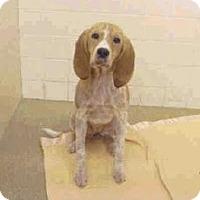 Adopt A Pet :: Luna May - Phoenix, AZ