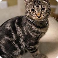 Adopt A Pet :: Mango - Byron Center, MI