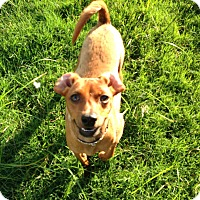 Adopt A Pet :: Preston - Knoxville, TN