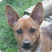 Adopt A Pet :: Koby - North Olmsted, OH