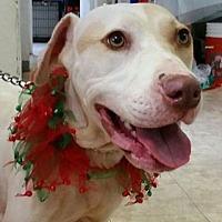 Adopt A Pet :: Joplin - St John, VI
