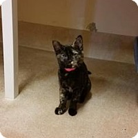 Adopt A Pet :: Salsa - Cumming, GA