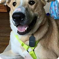 Adopt A Pet :: JOKER-PENDING ADOPTION - Amherst, OH