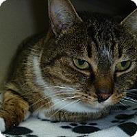 Adopt A Pet :: Gloria - Hamburg, NY