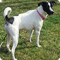 Adopt A Pet :: Kylie - Wilmington, DE