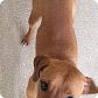 Adopt A Pet :: Story - Encinitas, CA