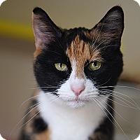 Adopt A Pet :: Hildegard - Kanab, UT