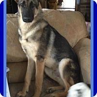 Adopt A Pet :: LUCKY - Manchester, NH