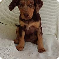 Adopt A Pet :: Henry pending adoption - Manchester, CT