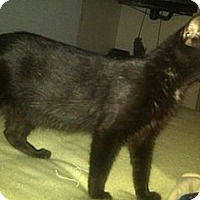 Adopt A Pet :: Reya - Sterling Hgts, MI