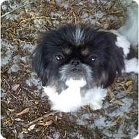Adopt A Pet :: Lola - Orlando, FL