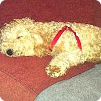 Adopt A Pet :: Sasha - Shirley, NY