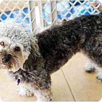 Adopt A Pet :: Max/AGILITY? - Commerce TWP, MI