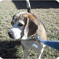 Adopt A Pet :: My Fair Lady - Phoenix, AZ