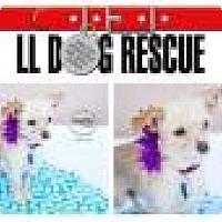 Adopt A Pet :: Coa Coa - Shawnee Mission, KS