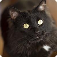 Adopt A Pet :: Hibbs - Chicago, IL