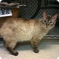 Adopt A Pet :: Buttons - Trevose, PA