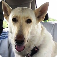 German Shepherd Dog Mix Dog for adoption in Garland, Texas - Gracie