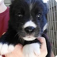 Adopt A Pet :: Catelyn - Gainesville, FL