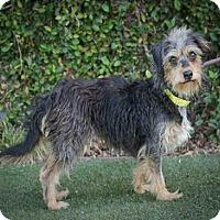 Adopt A Pet :: Marygold - Encino, CA