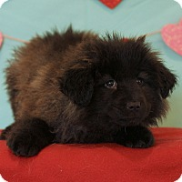 Adopt A Pet :: Jillian - Waldorf, MD