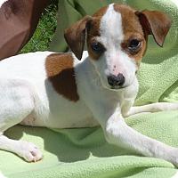 Adopt A Pet :: Shirley - Manning, SC