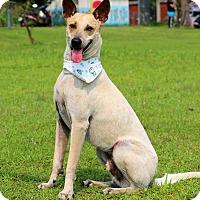 Adopt A Pet :: Luke - San Mateo, CA