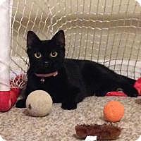 Adopt A Pet :: Fleury - Duluth, GA