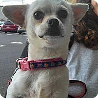 Adopt A Pet :: Nakita - Seattle, WA