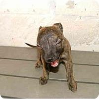 Adopt A Pet :: Minnie - Winter Haven, FL