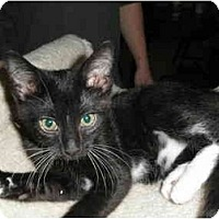 Adopt A Pet :: Frankie - Milwaukee, WI