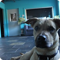 Adopt A Pet :: Tinker - Chicago, IL
